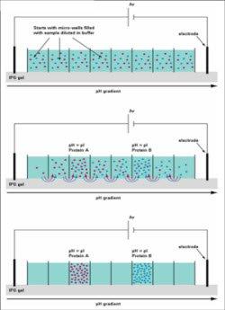 蛋白质质谱分析步骤