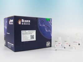 BeaverBeads™ Protein A/G Immunoprecipitation Kit