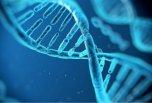 全基因组测序揭示喀斯特植物适应性进化机制