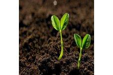 20210318 土壤中重金屬檢測分析技術